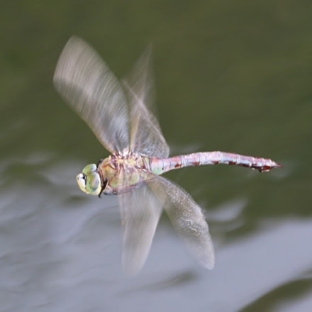 dragonfly, Canon EOS 70D, Canon EF-S 18-135mm f/3.5-5.6 IS