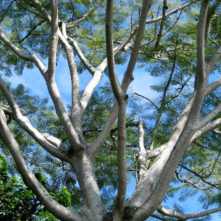 Brasilian forest, Canon POWERSHOT S5 IS