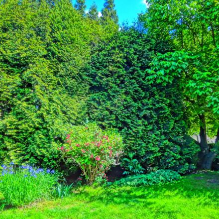 Garden, Sony DSC-WX50