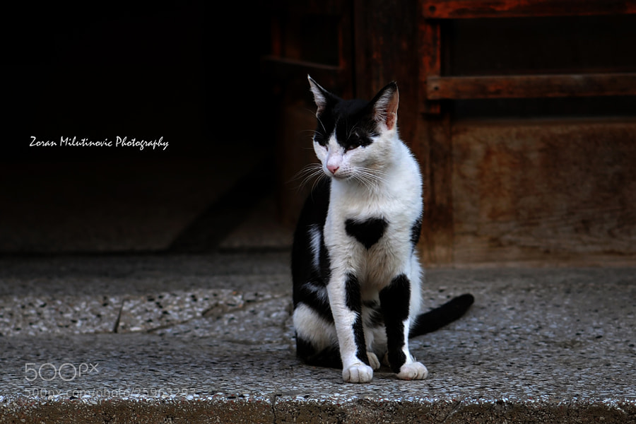 Photograph You shall not pass by Zoran Milutinovic on 500px