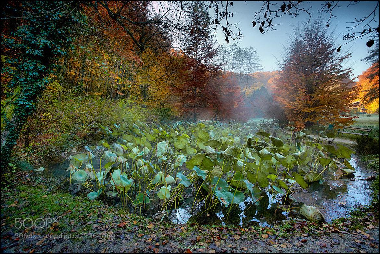Photograph Autumn Colours by Jaro Miščevič on 500px