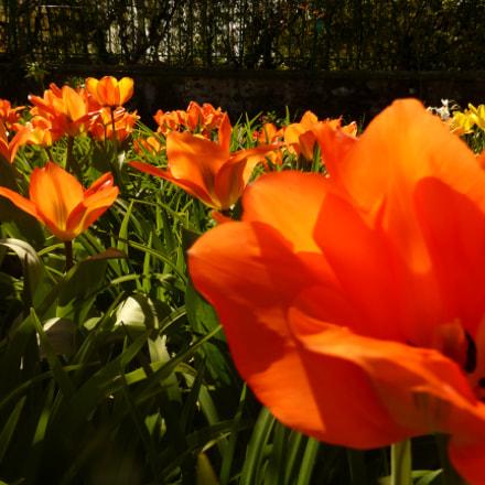 Giverny flowers, Panasonic DMC-TZ36