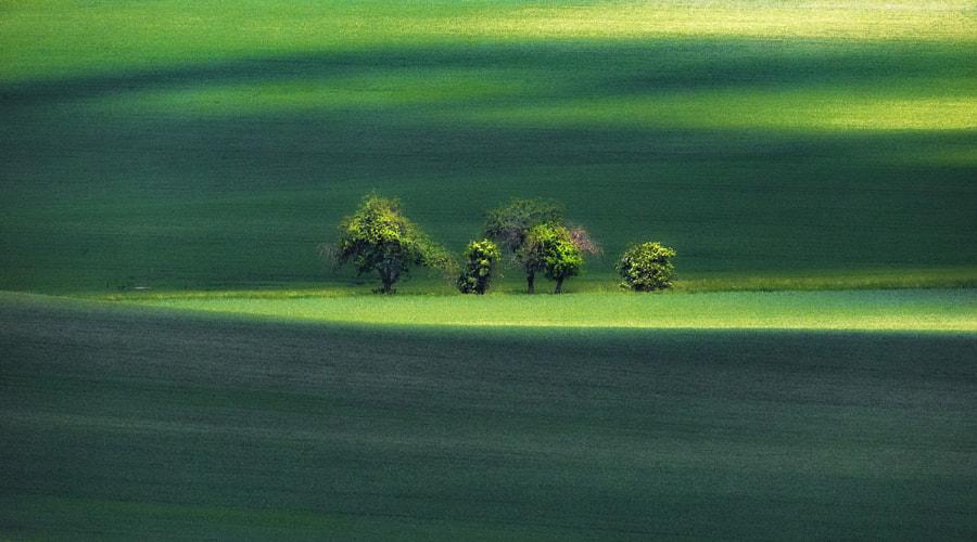 Trees, автор — Andy58/András Schafer на 500px.com