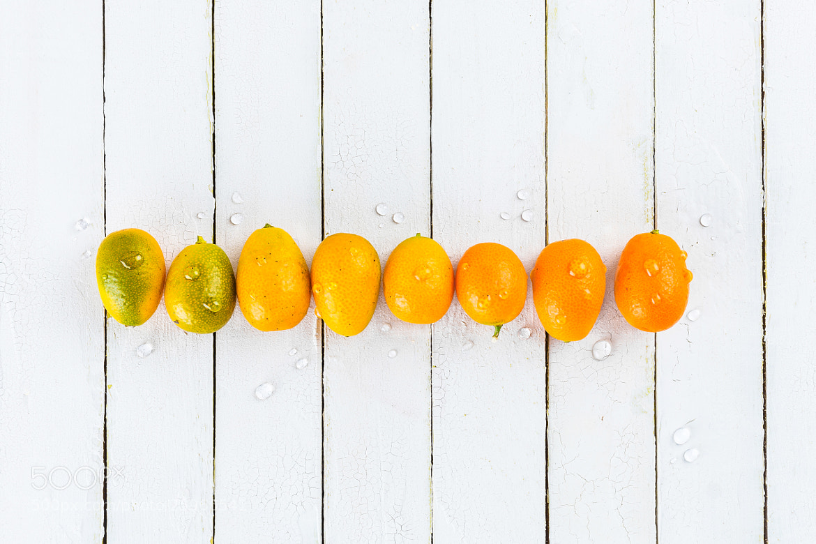 Photograph Kumquats in a Row by Suzanne Clements on 500px