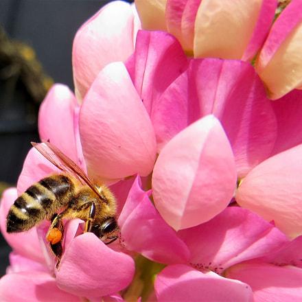Little bee in big, Canon POWERSHOT SX260 HS