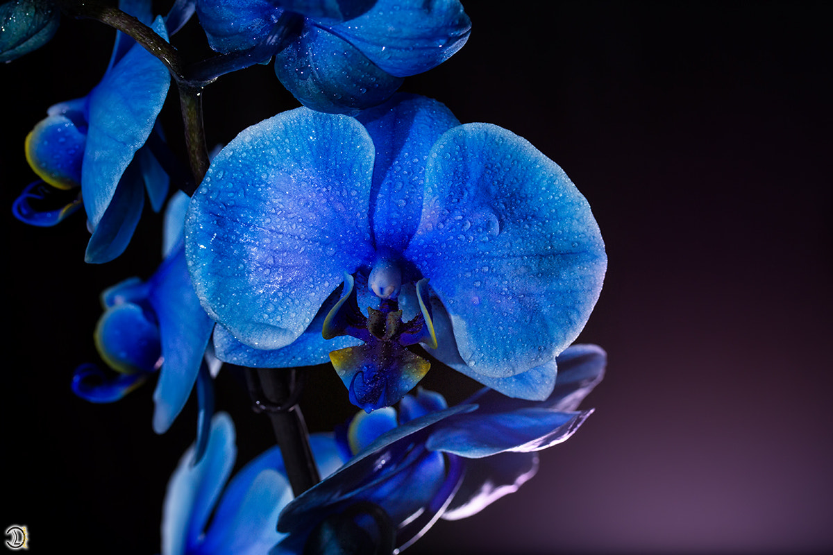 Photograph BLUE FLOWER by Daniel Lang on 500px