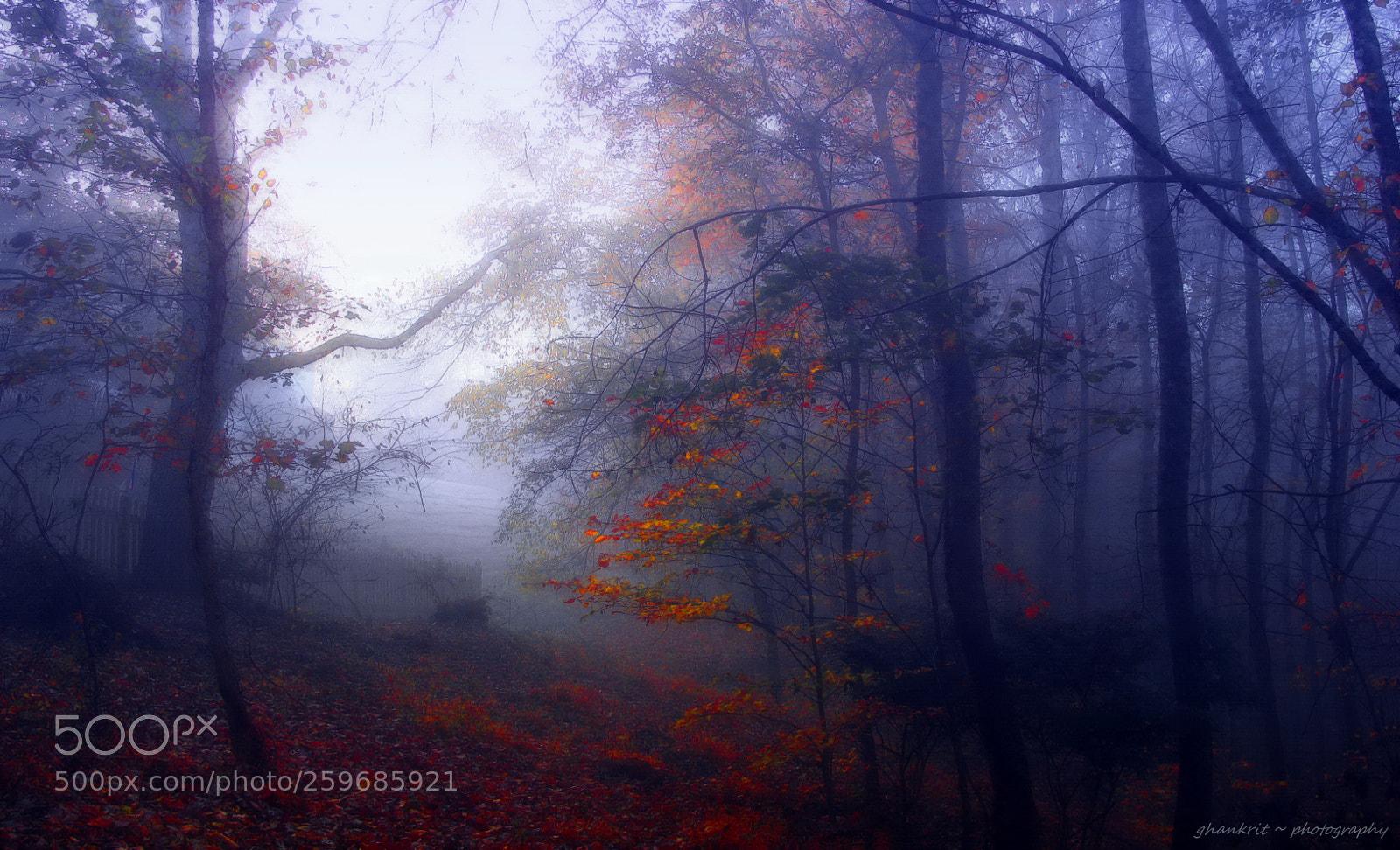 ..through the woods.., Sony DSC-H10