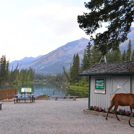 Morning at Banff Town, Nikon D610, AF-S Nikkor 18-35mm f/3.5-4.5G ED