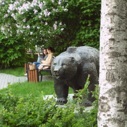 Moscow. Bear on the, Panasonic DMC-FX500