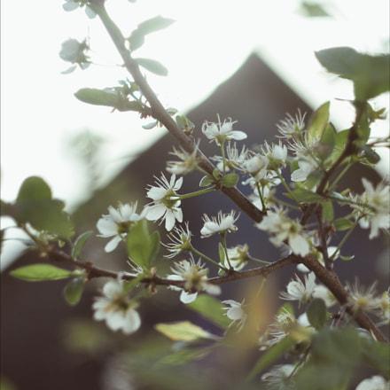 Untitled, Nikon D90, Manual Lens No CPU
