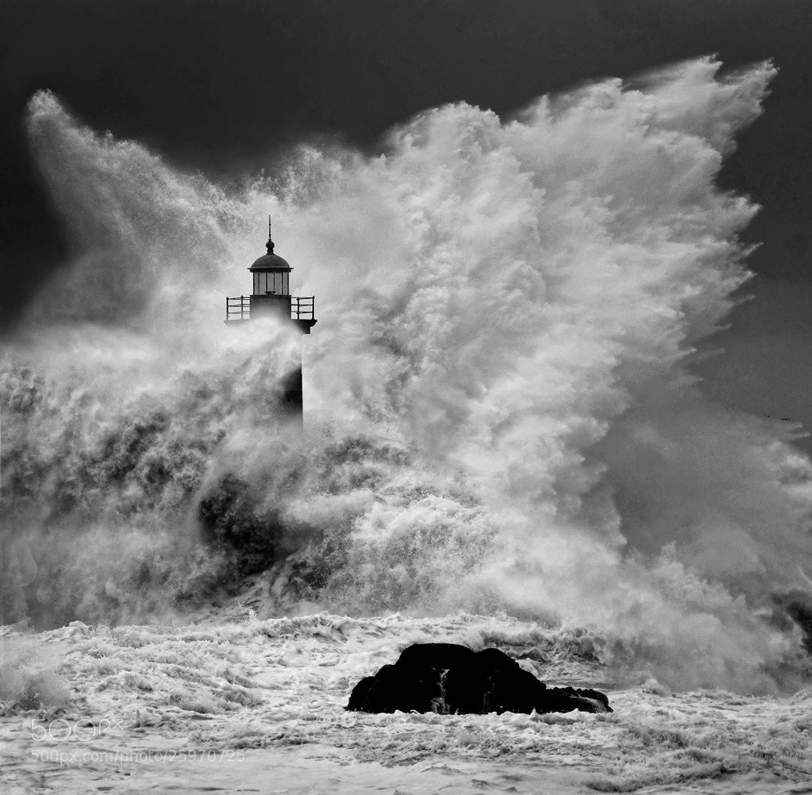 Photograph Enduring the elements 2 BW by Veselin Malinov on 500px