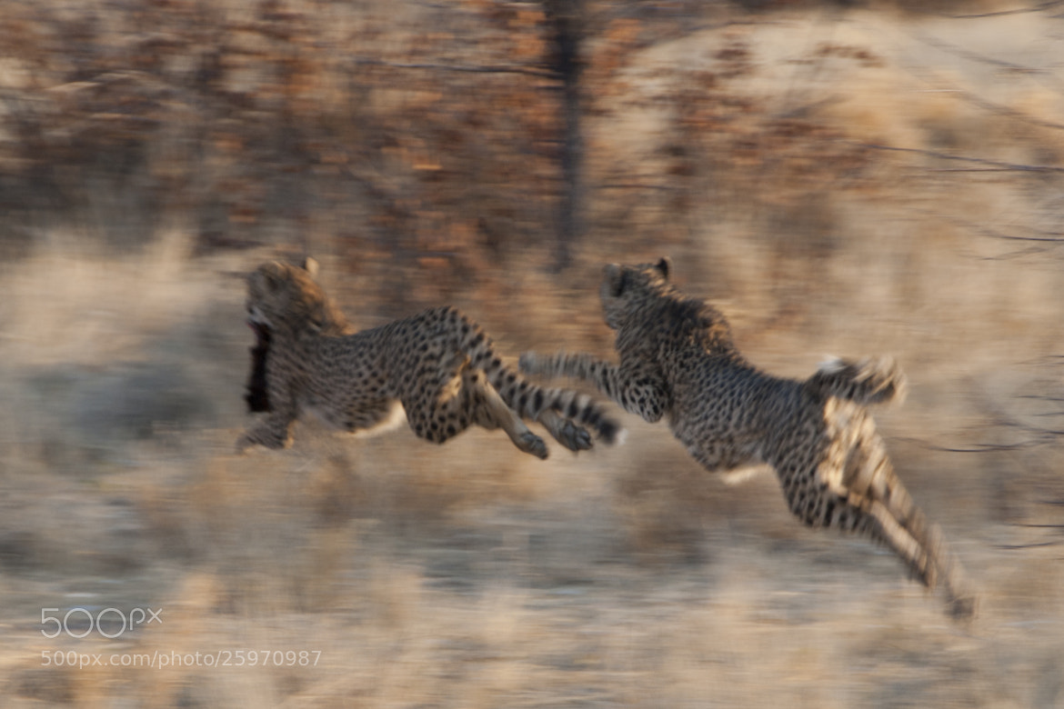 Photograph High speed by Beatriz Sanchez on 500px