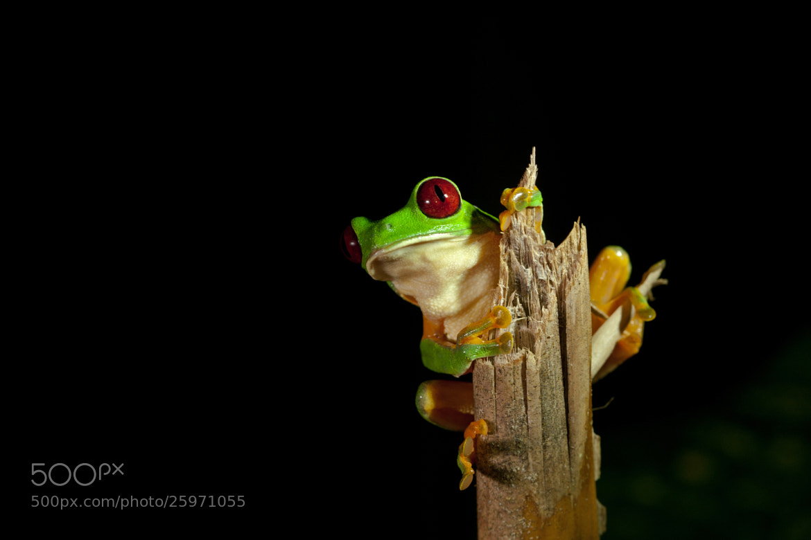 Photograph Small Frog Big World by Alex  Thomson on 500px
