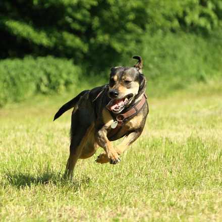 the fun of speed, Canon EOS 6D