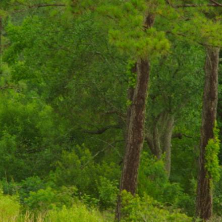 Urban landscape, Pentax K10D, Tamron AF 70-300mm F4-5.6 LD Macro 1:2