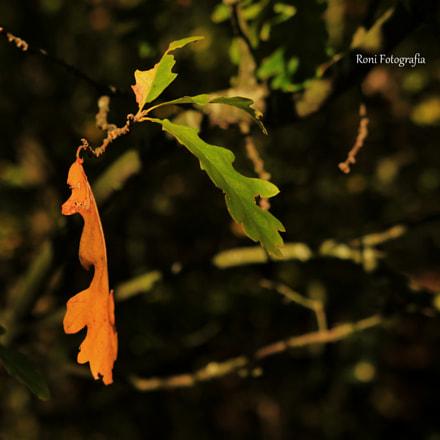 Colour of Autumn, Canon EOS 600D, Sigma 18-35mm f/1.8 DC HSM