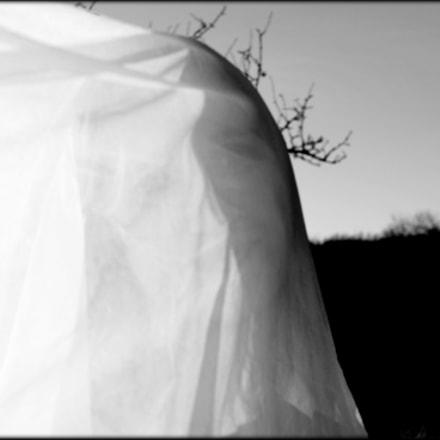 Veiled, Canon EOS 60D, Sigma 35mm f/1.4 DG HSM