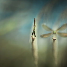 Imagine by Cath Schneider (CathSchneider)) on 500px.com