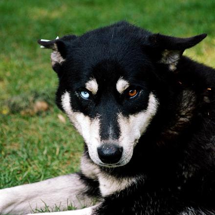 A living dog is, Nikon D70, AF-S DX Zoom-Nikkor 18-135mm f/3.5-5.6G IF-ED