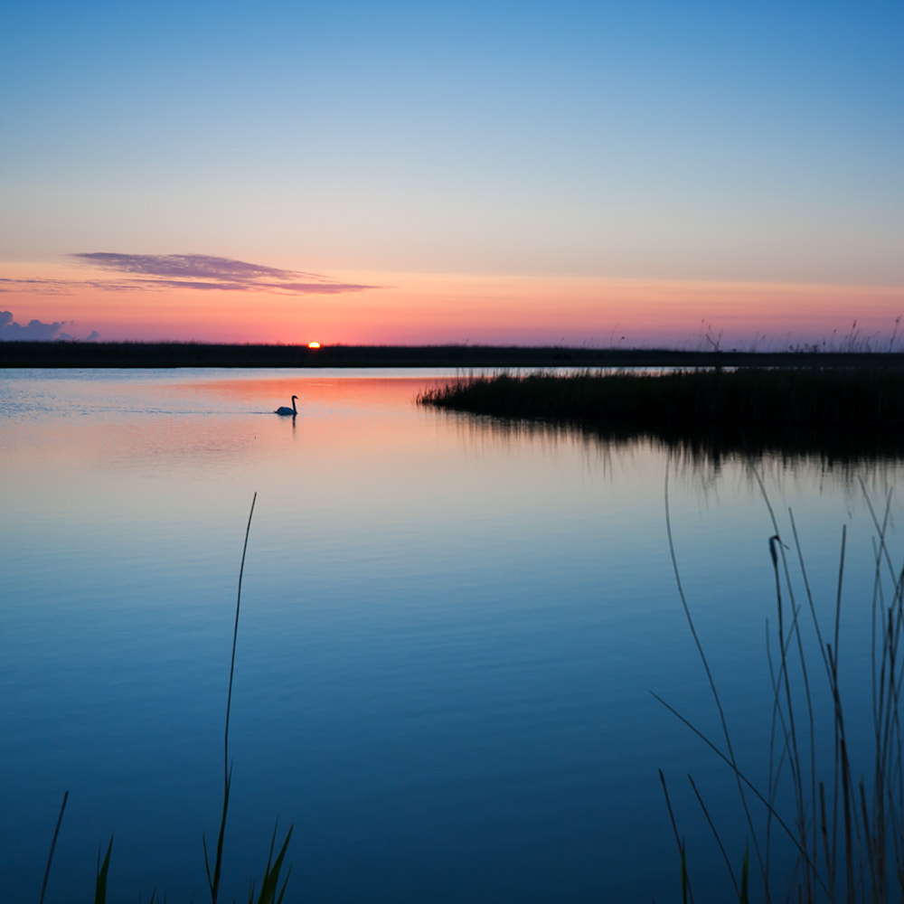Photograph Dawn with a swan by Jan Teeuwen on 500px
