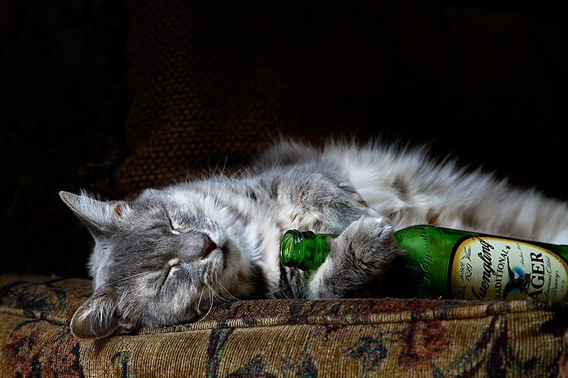 Photograph After the Party by wendy  on 500px