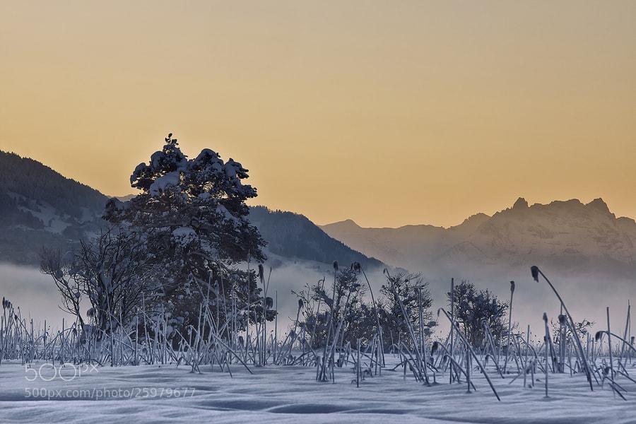 Photograph morning light by Sandra Löber on 500px