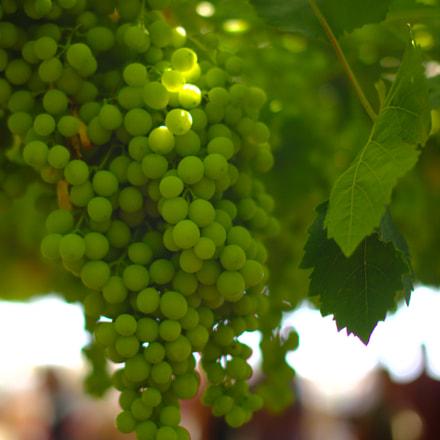 Grapes, Canon EOS 6D, Sigma 50mm f/1.4 EX DG HSM