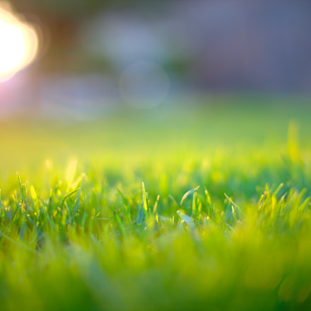 Grass, Canon EOS 6D, Sigma 50mm f/1.4 EX DG HSM