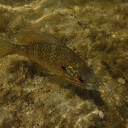 Sunfish, Sony DSC-TX30