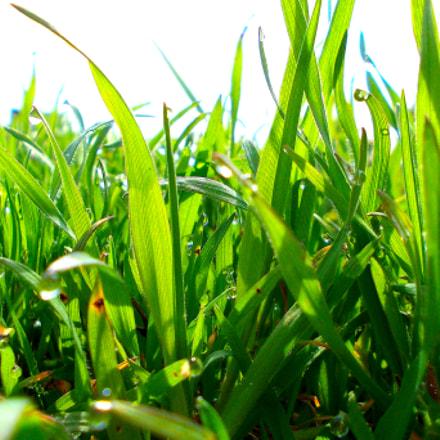 green, Nikon COOLPIX L23