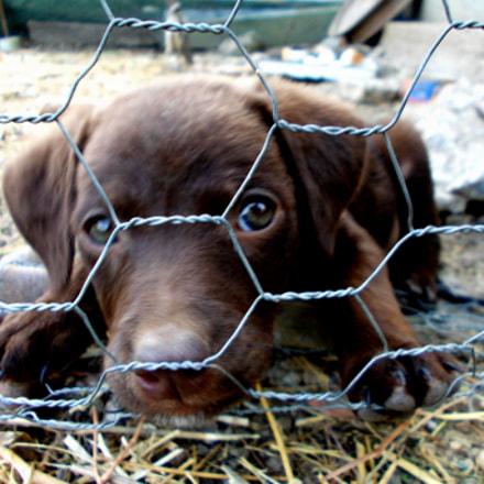 sad puppy, Nikon COOLPIX L23