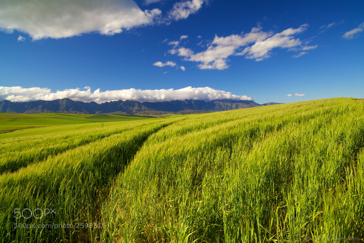 Photograph Open Field by Mohamed  Al Faris on 500px