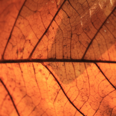 Leaf Texture, Canon EOS 1100D, Canon EF-S 55-250mm f/4-5.6 IS II
