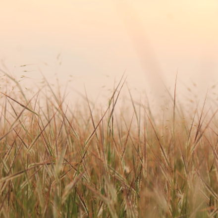 Grass, Canon EOS 1100D, Canon EF-S 55-250mm f/4-5.6 IS II
