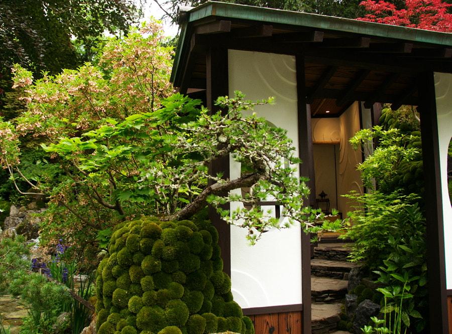 Оmotenashi Garden, Chelsea Flower Show by Sandra  on 500px.com