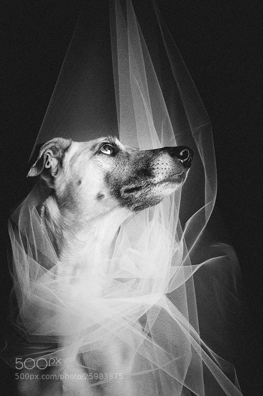 Photograph Les Mis by Elke Vogelsang on 500px