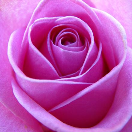 Una Rosa, Canon POWERSHOT SX100 IS