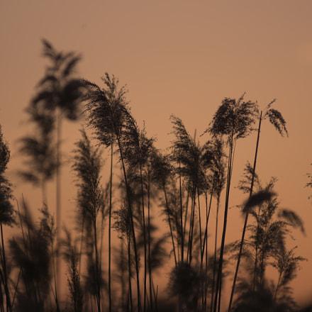 Red river, Nikon D7200, AF Zoom-Nikkor 80-200mm f/2.8 ED
