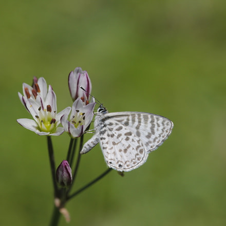 The butterfly and the, Canon EOS 60D, Sigma 105mm f/2.8 Macro EX
