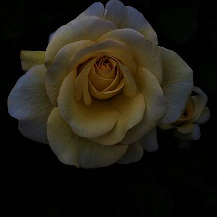 rose, Samsung Galaxy E5