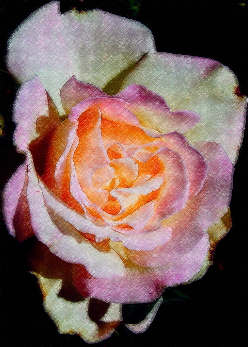 Photograph Pastel Rose by Jean-Pierre S on 500px