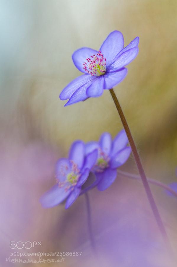 Photograph Colorfulness by Anton Simon on 500px