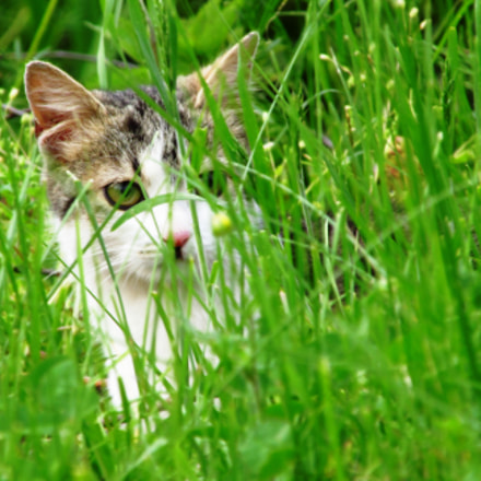 Cat hiding in grass, Canon POWERSHOT SX160 IS