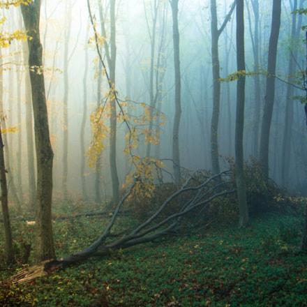 sun&fog, Sony DSC-T70
