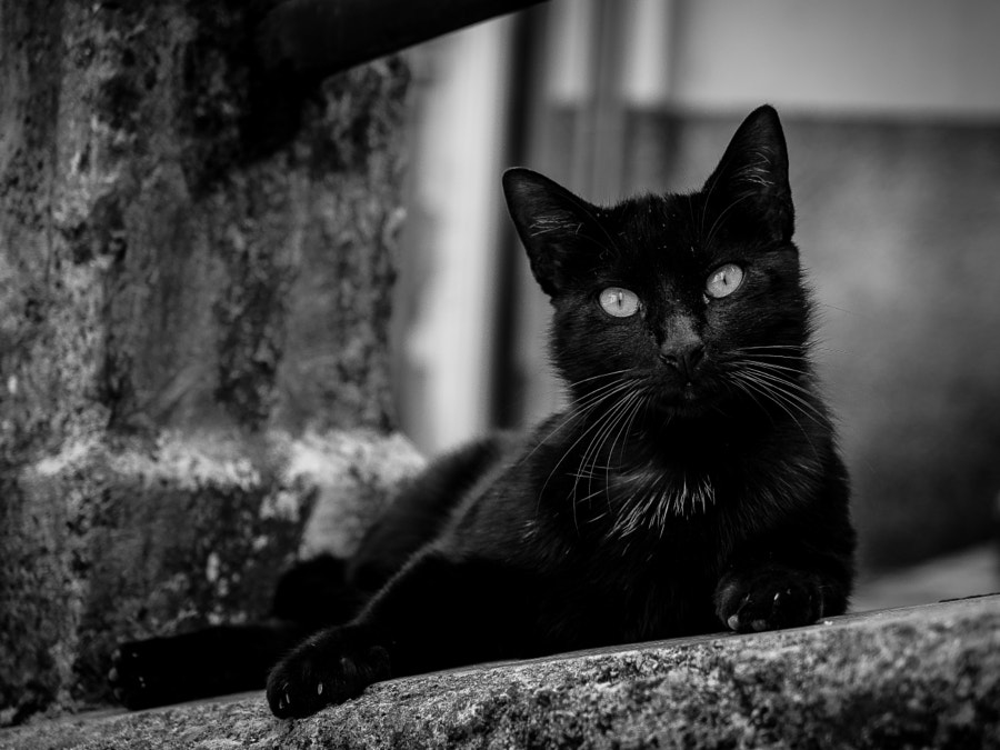 Black cats - The urban panther... by Giovanni Turco on 500px.com