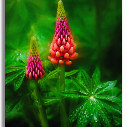 The Wonder of Flowers ...., Canon EOS D60
