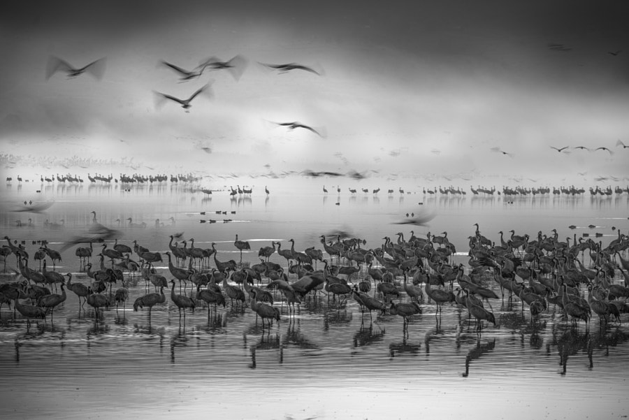 Cranes by the lake by Keren Or on 500px.com