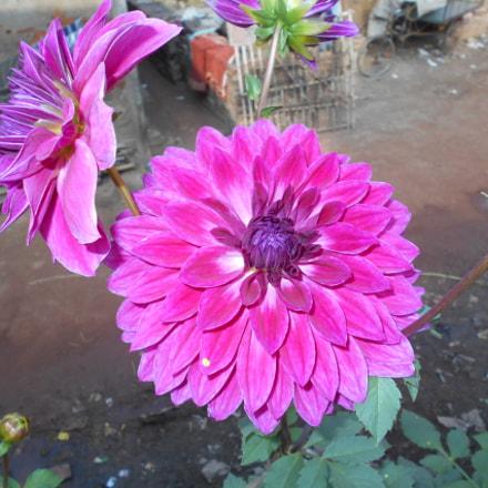 FLOWER, Nikon COOLPIX L28