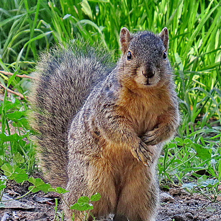A Squirrel Standing Up, Canon POWERSHOT SX50 HS, 4.3 - 215.0 mm