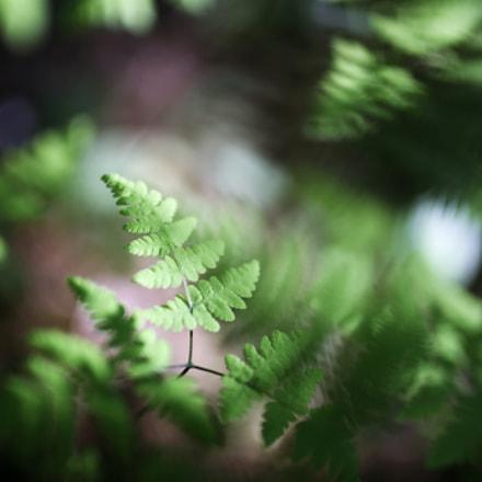 Untitled, Canon EOS 6D, Sigma 35mm f/1.4 DG HSM
